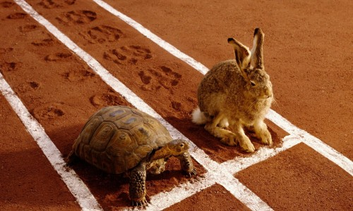 turtle and rabbit.jpg