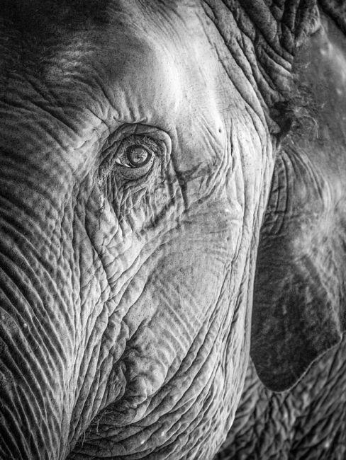 elephant tear.jpg